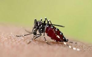 Fiebre-chikungunya