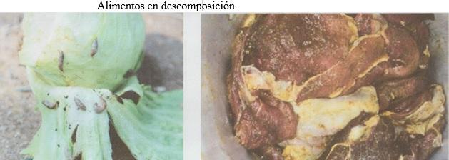 COMIDAS DESCOMPOSICION